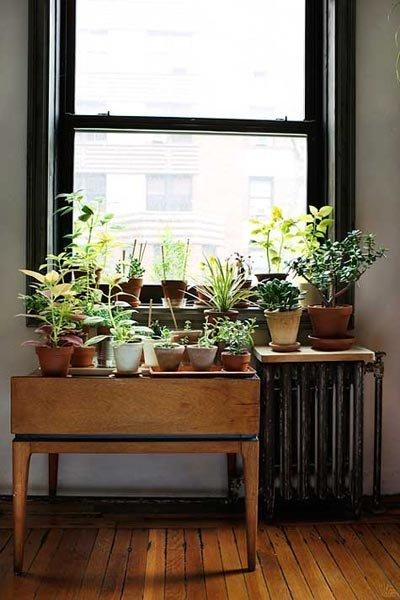 homeplants